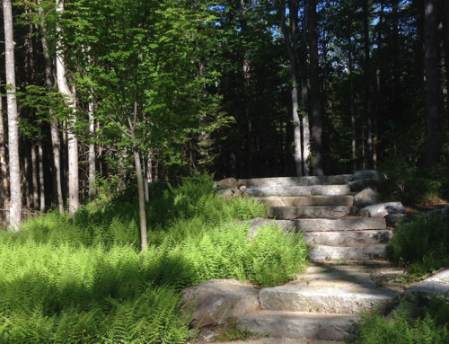 Ferns and Stone Steps